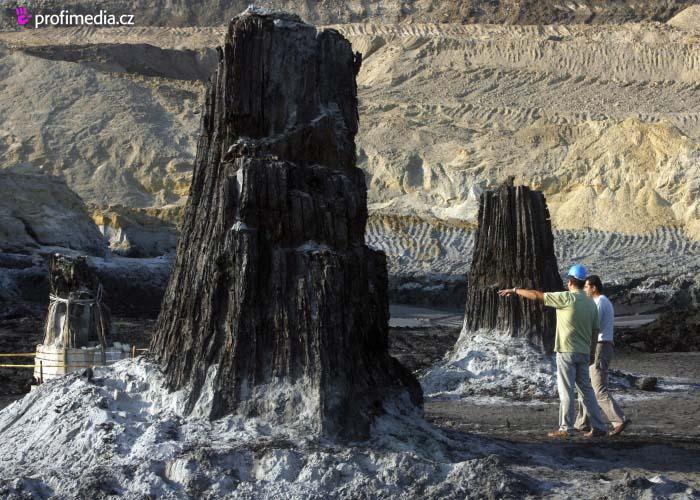 Nalezen zachovalý prehistorický les!